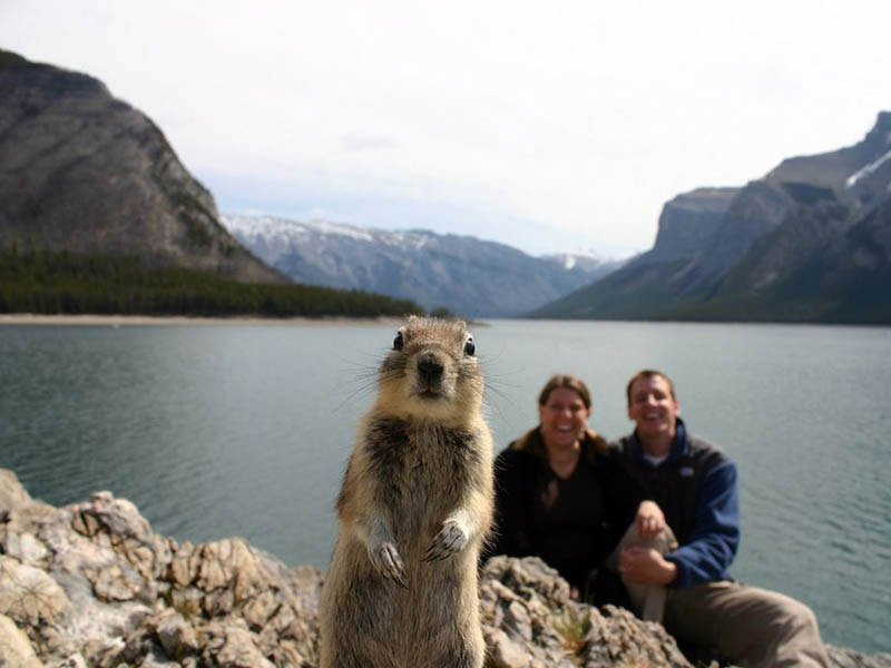 squirrel-photobomb-banff.jpg